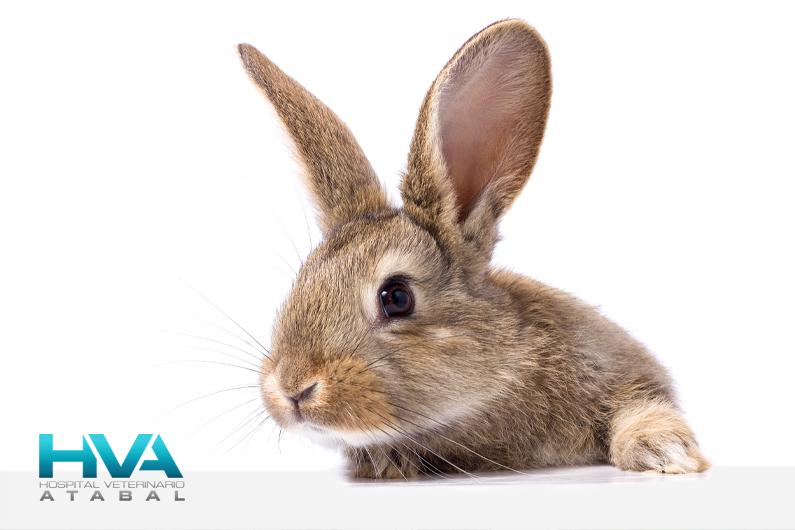 conejos cuidados básicos