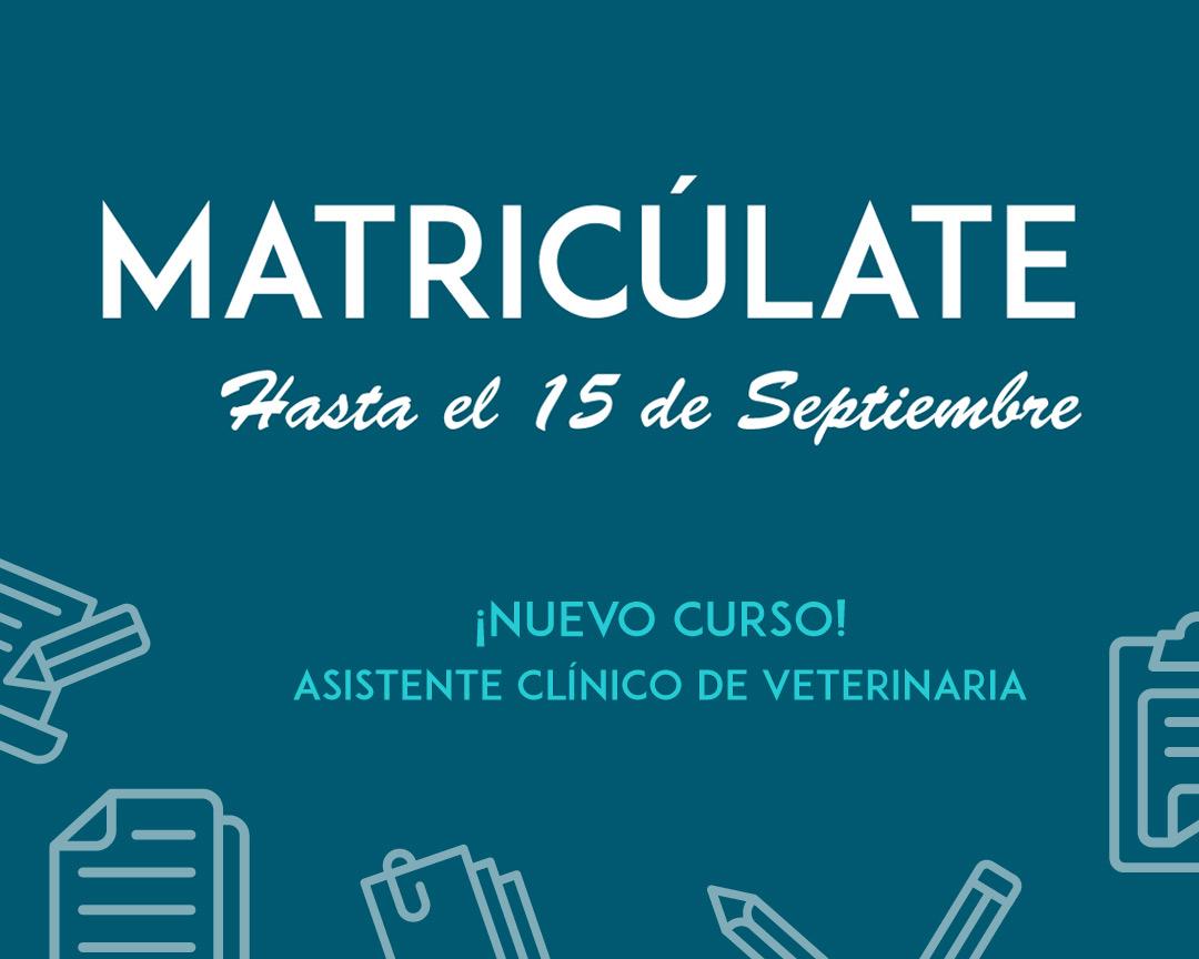 Curso Auxiliar Asistente Veterinario Málaga