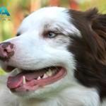 problemas dentale -mascotas perros gatos