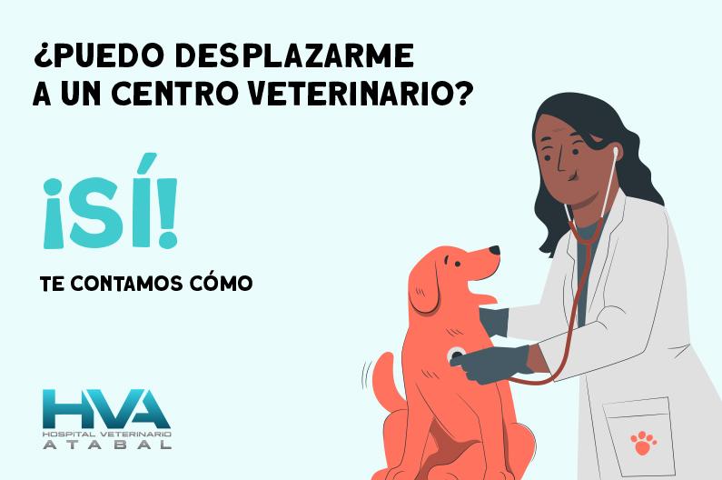 veterinario málaga abierto confinamiento