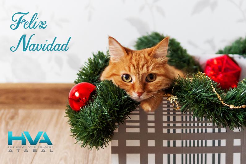 feliz navidad veterinario malaga