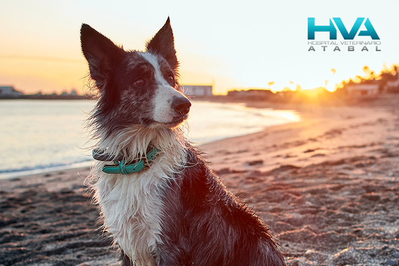 consejos ir playa perro